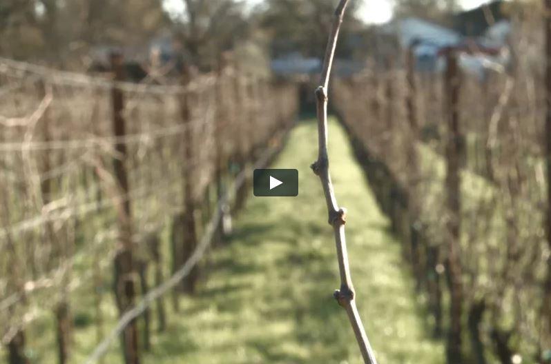 click to view winter at olivet grange