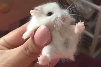 Tiny fluff.